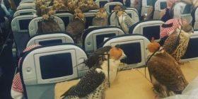 Saudi Arabia prince, the result was purchased a flight 80 seats worth wwwwwwwwwwwwwwww