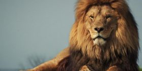 Lion mauls two handlers in Japan – Bangkok Post