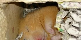 It's Nezo of out of the hamster cute www This bed is www (with image)