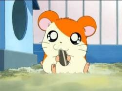 "[Large delight results shed ""Hamtaro"" in Taiwan wwwwwwwwwwwwwwwwwwww"