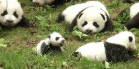 Panda cub in Japan meets media before public debut – New York Post