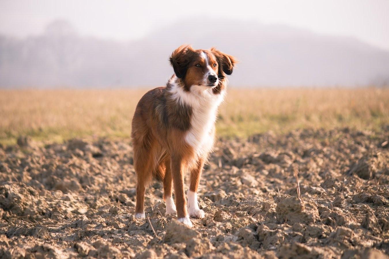 [Sad news] Nihon'ookami, was just a dog