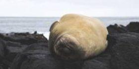 The increased Todo occupies the island. Wakkanai fishery damage amount more than 1.6 billion yen.