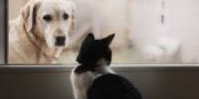 【Emergency invitation】 How to catch the cat sliding door closed automatically