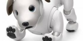 [Good news] Izune, get along with aibo