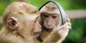 【Sad news】 Monkeys in Fukushima, somehow cell loss and brain shrinks