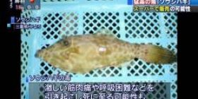 """【Impact】 Very toxic fish, purchaser notified """"I ate it, but I am fine"""""""