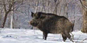 [Sad news] The hunter who went on wild boar, dead died after being hit by wild boar