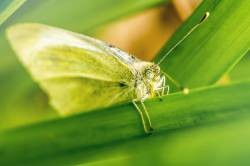 I just write about insects of unusual ecology