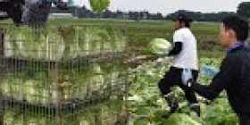 No. of foreign workers in Japan triples in decade to record 1.46 million – Japan Today