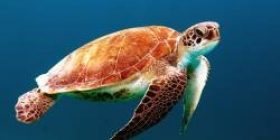 Human life 80 years old ふ Hm Whale life 100 years ← Fat! ? Land turtle life 100 years old or more ←! ? ! ? ! ?
