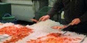 Japan slams WTO ruling on S. Korea Fukushima food row – FRANCE 24