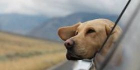 """[Sad news] """"Be buried with your dog,"""" euthanized according to your dog, your will"""