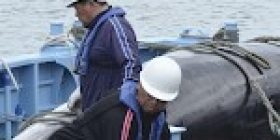 EU worried about rise in whale exports to Japan from Iceland, Norway – Kyodo News Plus