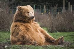 [Sad news] 70m long bear, in Akita